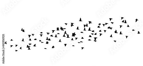 Slika na platnu A flock of flying birds. Vector illustration