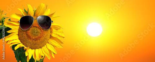 Fotografie, Obraz Sonnenblume mit Sonnenbrille