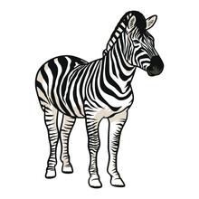 Zebra Vector Illustration With Shading