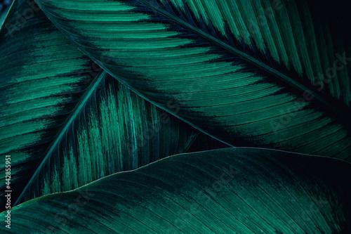 Obraz na plátně abstract green leaf texture, nature background, tropical leaf