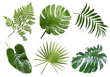Set With Beautiful Fern And Other Tropical Leaves On White Background