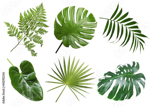 Fototapeta Set with beautiful fern and other tropical leaves on white background