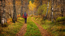 A Mature Female Walker In Autumn On A Forest Trail In Glen Affric In The Scottish Highlands