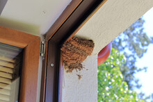 Closeup Of Empty Swallow Nest On The Wall