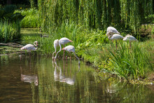 A Group Of Flamingos Is Standing By A Pond In A Park