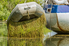A Small Dingy Suspended Behind A Sailboat With A Thick Mat Of Water Weed Hanging From It's Harness.