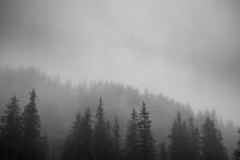 Misty Forest (Vorarlberg, Austria)