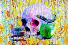 Human Skull With Snake An Apple