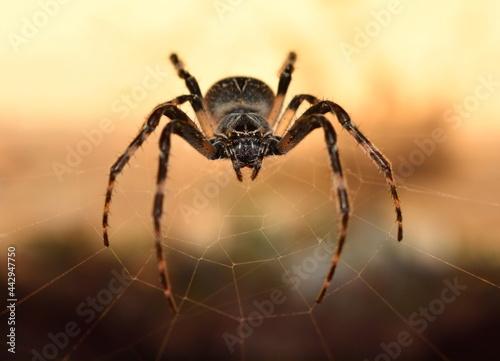 Canvastavla spider close up