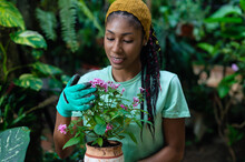Ethnic Woman Planting Flowers In Pots In Greenhouse