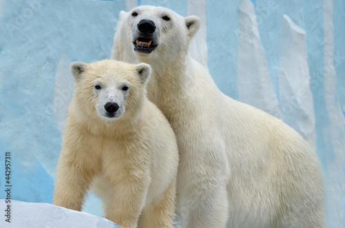Canvastavla polar bear in the snow