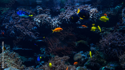 Foto Coral colony and coral fish.  Underwater view