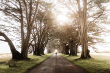 Traveler On Majestic Road In Tunnel Of Cypress Trees
