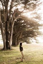 Woman On Meadow Of Cypress Trees Alley In Sunlight