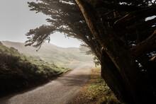 Bent Dark Trees Alongside Paved Path In Misty Park