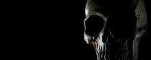 Human Skull With Rim Lighting On A Black Background