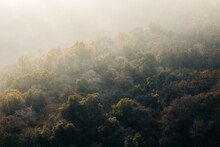 Picturesque Scenery Of Dense Forest Against Misty Mountains In Sunny Morning