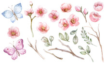 Spring Elements Set. Pink Flowers, Leaves, Branches Isolated On White Background.. Apple Tree, Cherry, Sakura, Butterflies. For Frames, Decorations, Invitations, Wedding.
