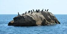Les Cormorans Sur Le Rocher En Finistère Bretagne France
