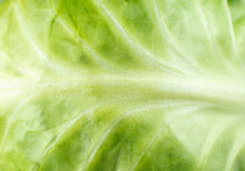 Green Cabbage Texture Background. Close Up. Macro Photo.