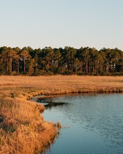 A Wetland Near Bodie Island Lighthouse, In The Outer Banks, North Carolina
