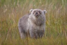The Cutest Bear Cub Ever