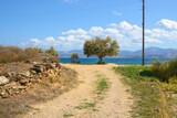 Fototapeta Kwiaty - Pathway to the sandy Logaras beach with blue sea water on Paros island