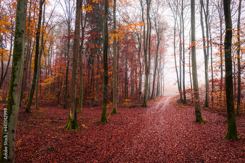 Autumn leafy footpath in forest. Aerial view of wildlife, Poland.