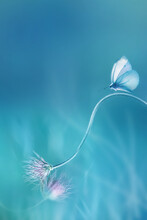 Delicate  Fragile Butterfly And Pink Butterfly On A Blue Background. Summer Minimalist Image. Copy Space.