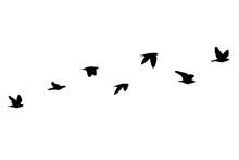 Flock Of Birds Flying Isolated On White Background