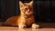Młody rudy kotek
