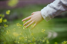 Close Up Hand Of Woman Dressed In Linen Touching Blossoming Yellow Wild Flowers In A Windy Flower Field With Bokeh Background