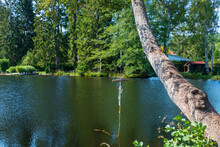 Seil Zum Ins Wasser Springen An Einem Baum Am Sägmühlweiher Ludwigswinkel In Der Pfalz