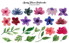 Flower Watercolor Collection