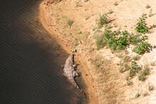 Nile Crocodile, Guelta D'Archei. Chad, Africa