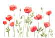 Red Poppy Flower Row Watercolor Painting, Hand Drawn and Painted Isolated on White Background