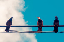 Pigeons On The Wires, In Blue Sky.