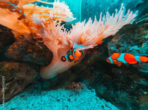 Billede på lærred fish in aquarium