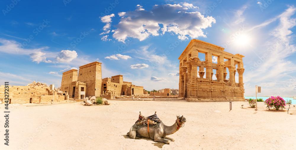 Philae Temple, Trajan's Kiosk and a camel, beautiful panorama, Aswan, Egypt - obrazy, fototapety, plakaty