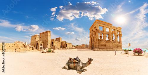 Philae Temple, Trajan's Kiosk and a camel, beautiful panorama, Aswan, Egypt