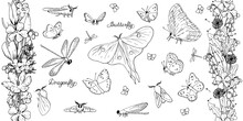 Vector Set Of Butterflies, Dragonflies. Collection Of Isolated Insects On A White Background. Endless Flower Brushes, Garlands Of Spring Flowers: Dandelions, Crocuses, Jasmine, Lilies Of The Valley.