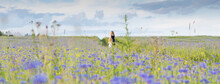 Two Girls Walk Through A Cornflower Field On A Sunny Summer Day, Close Up Image
