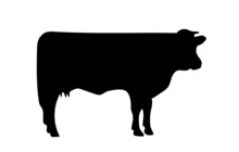 Silhouette Of A Cow On A Separate White Background