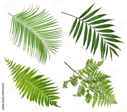 Fotografie, Obraz Set with beautiful fern and other tropical leaves on white background