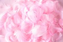 ピンクの羽根の背景