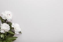 Fresh White Peony Flowers On Light Gray Table Background. Empty Place For Emotional, Sentimental Text, Quote Or Sayings. Closeup. Top Down View.