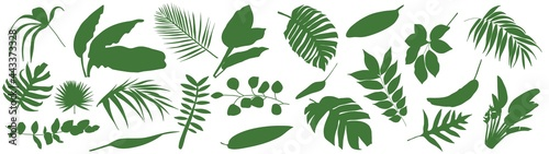 Canvas Print Set of Tropical leaves