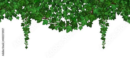 Fotografía Ivy foliage garland