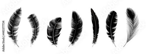 Fotografia Realistic black feathers