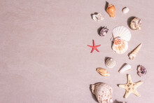 Summer Vacation Concept. Assorted Seashells On Sandy Stone Background
